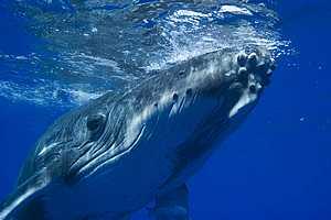 tn_whale.jpg